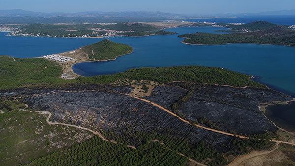 Ormanlar ve canlılar bilinçli olarak yakılıyor