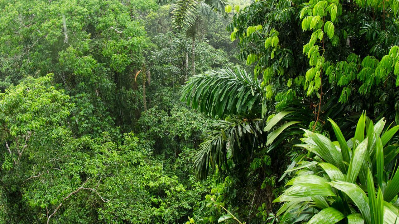Brezilya 348 Bin Hektar Yağmur Ormanı Arazisini Madencilik