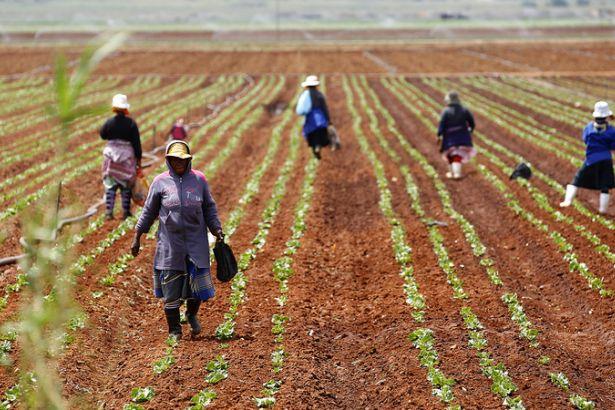 Güney Afrika beyazların elindeki toprakları alıp yerlilere dağıtacak